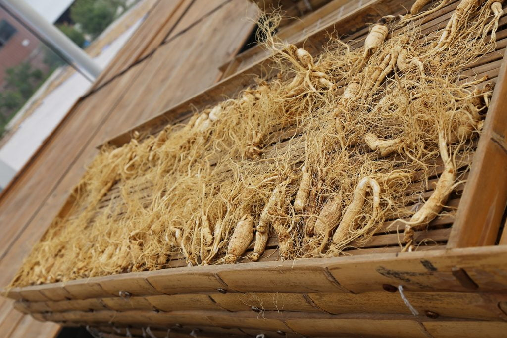 photo of ginseng in harvest